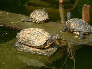 turtles-1548521